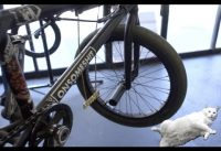 CATS DIG WORKING ON BMX BIKES