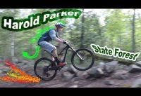Mountain Biking Harold Parker State Forest | Andover, Massachusetts