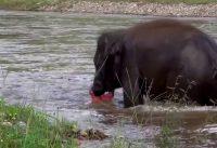 Elephants - A mans best friend