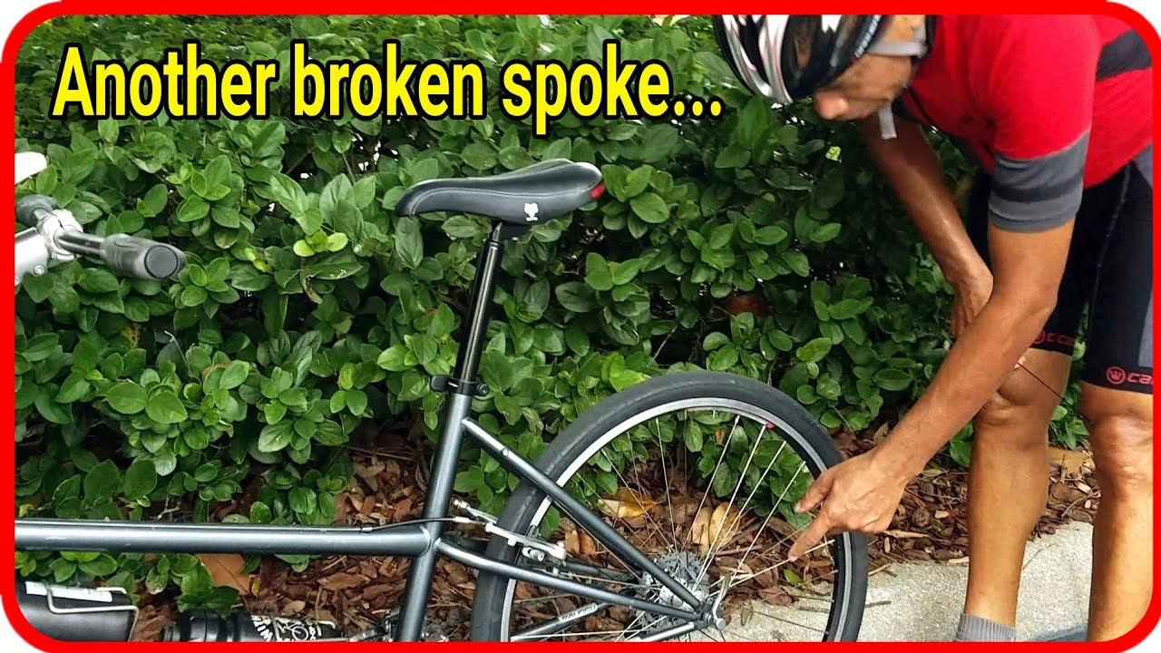 Spoke Replacement Without Removing the Tandem Bike Wheel, Cassette, or Tire | TANDEM ADVENTURERS