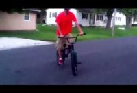 Riding homemade BMX ramps pt.1